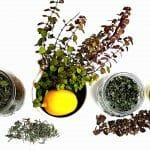 Prírodná vlasová kozmetika z byliniek