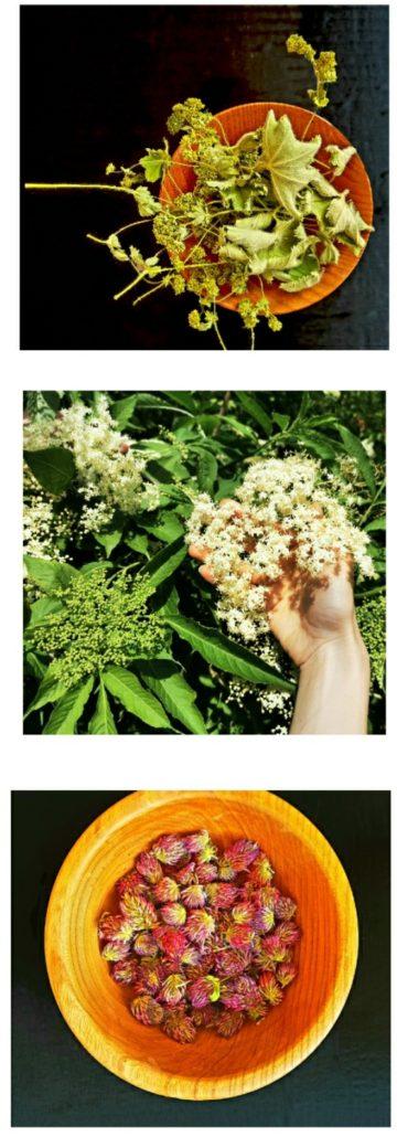 Kalendár zberu byliniek - máj, jún